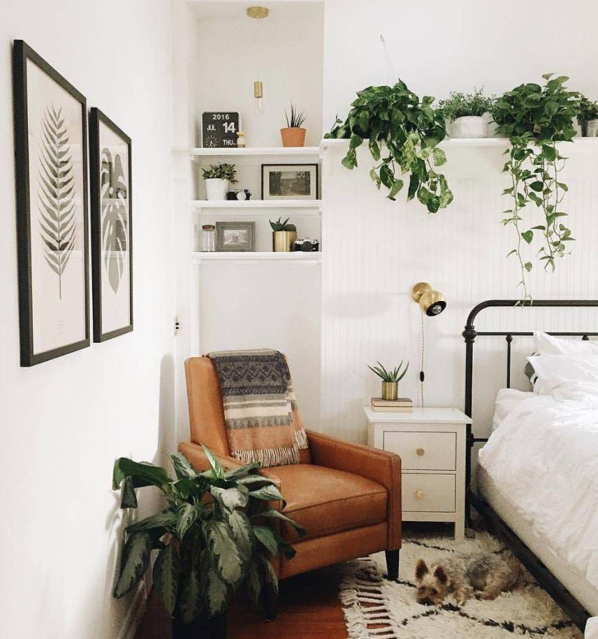 plantas decorativas para habitacion matrimonio