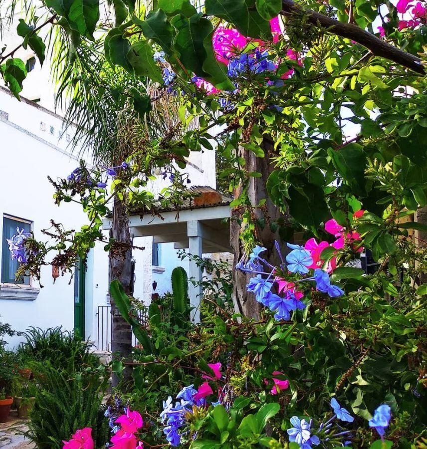 patio de cortijo con muchas plantas
