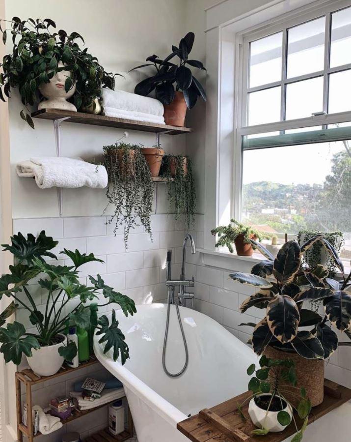 decoracion de plantas en el baño