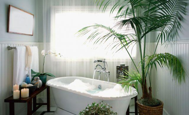 ideas de plantas para un cuarto de baño