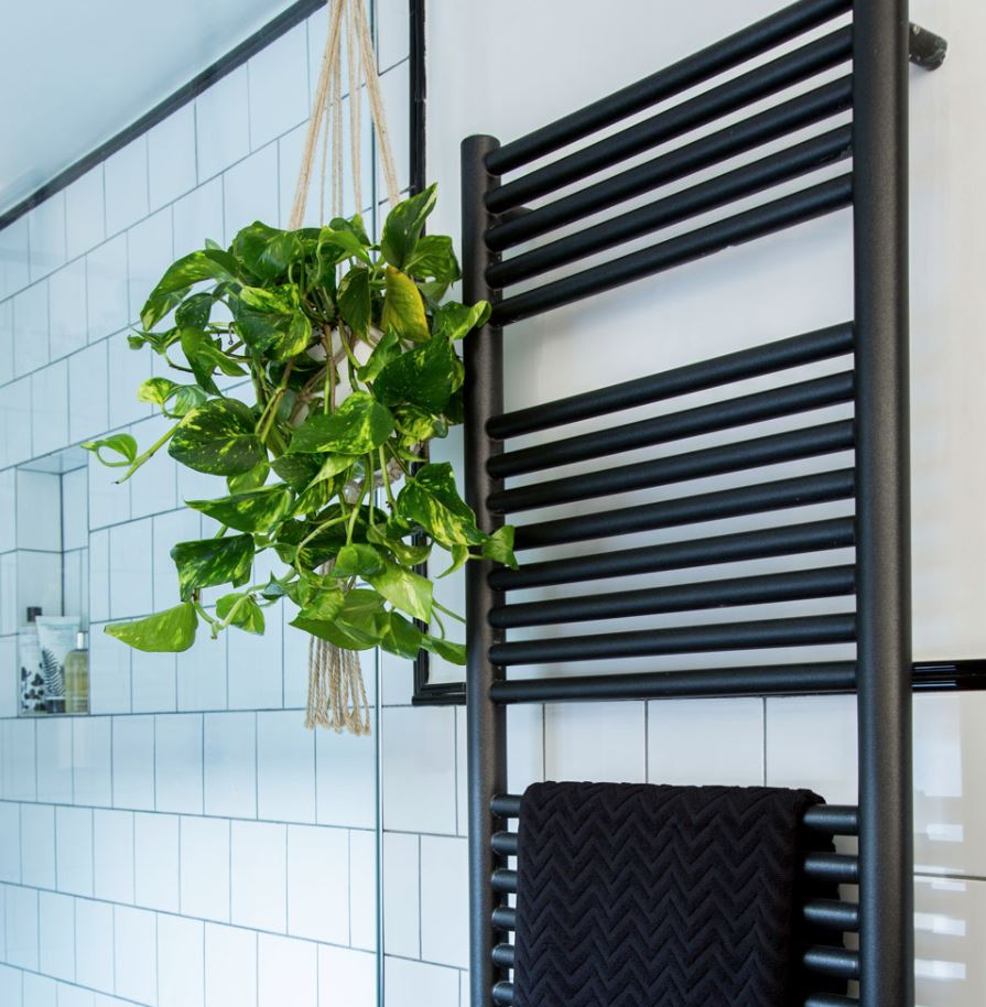planta colgante para baño