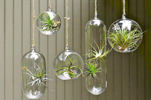 plantas colgantes pared interior