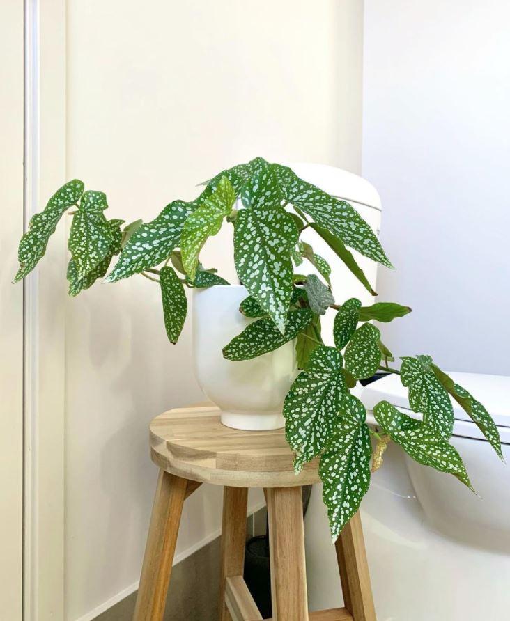plantas en tu baño