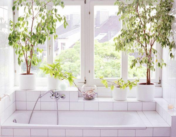 plantas para bañera