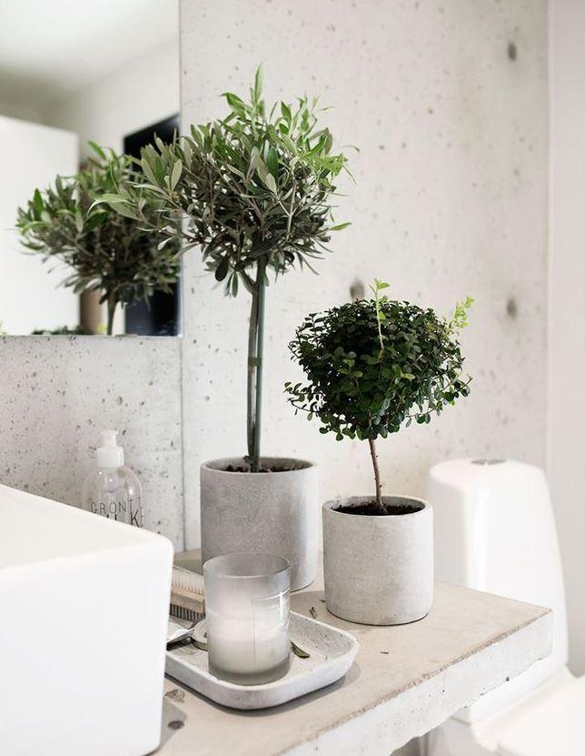 plantas para el baño feng shui