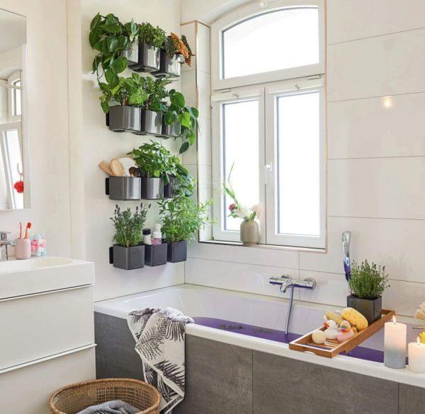 plantas para pared baños