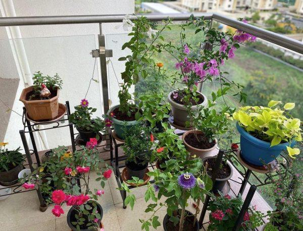 decoracion de terrazas exteriores con plantas