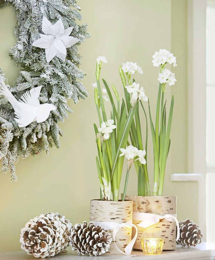decoracion navideña con plantas
