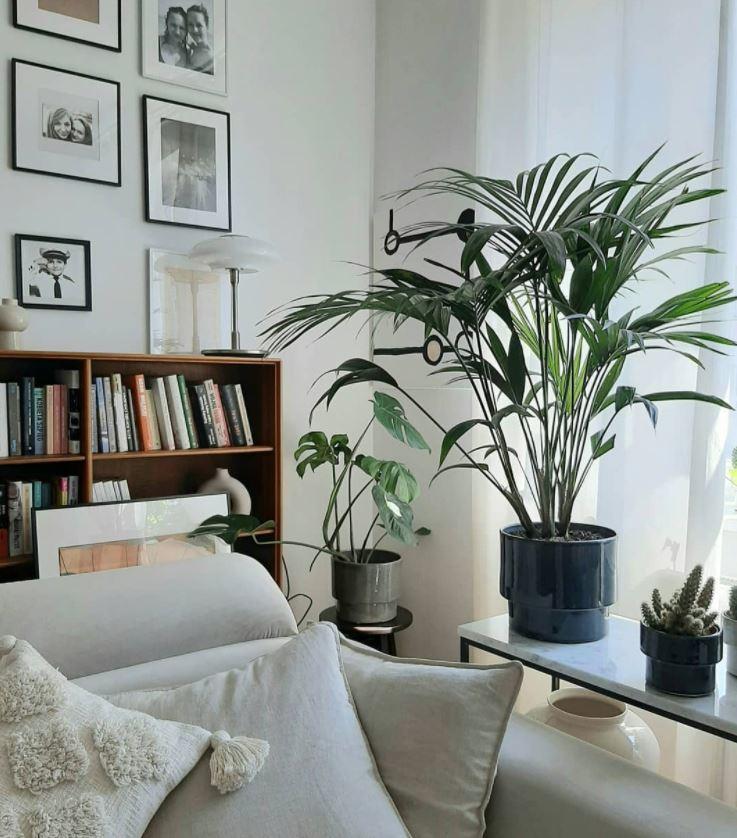 decoracion plantas interior