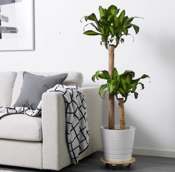 decoracion plantas salon