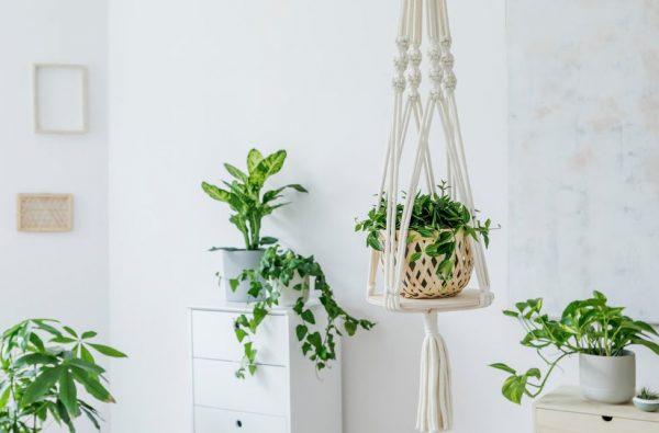 donde poner plantas colgantes