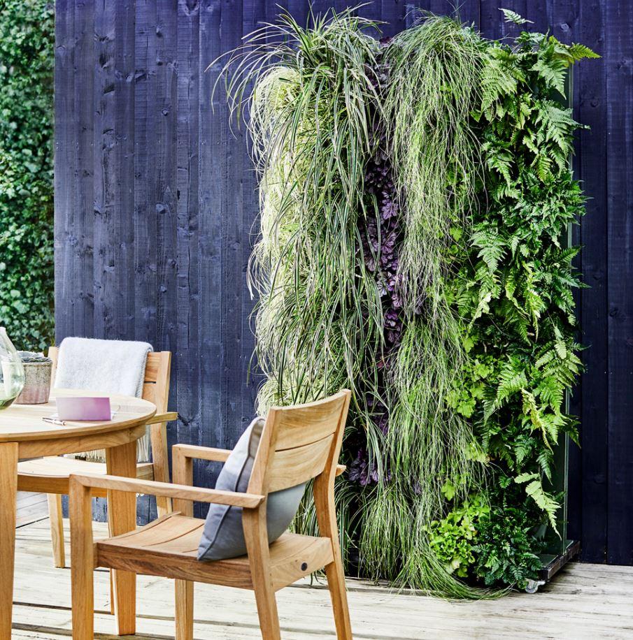 enredaderas de jardin para decorar