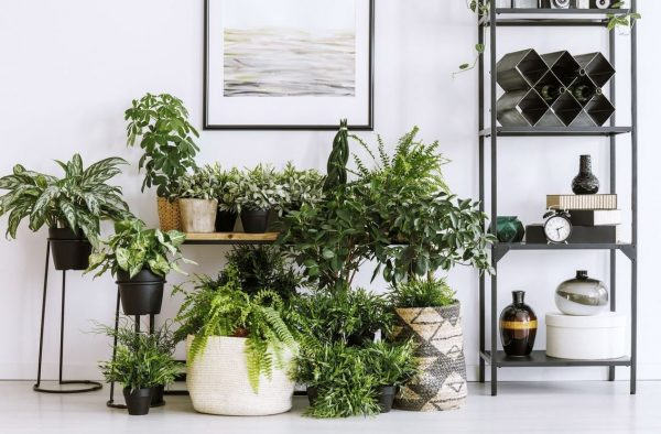 estante de madera para plantas