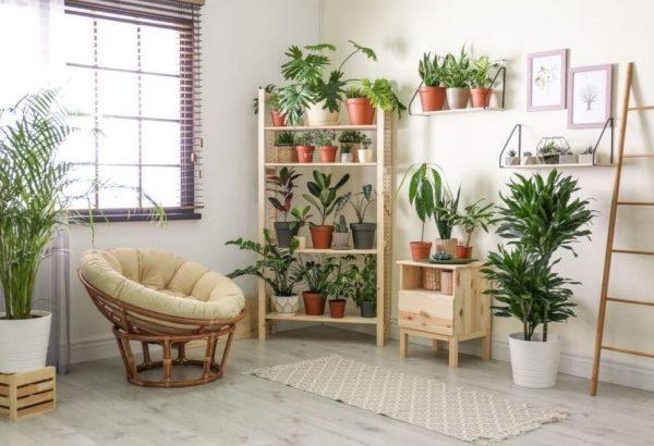 estanteria cesta de mimbre plantas salon