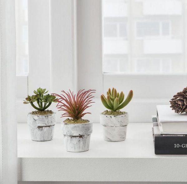 ideas de plantas para salon moderno