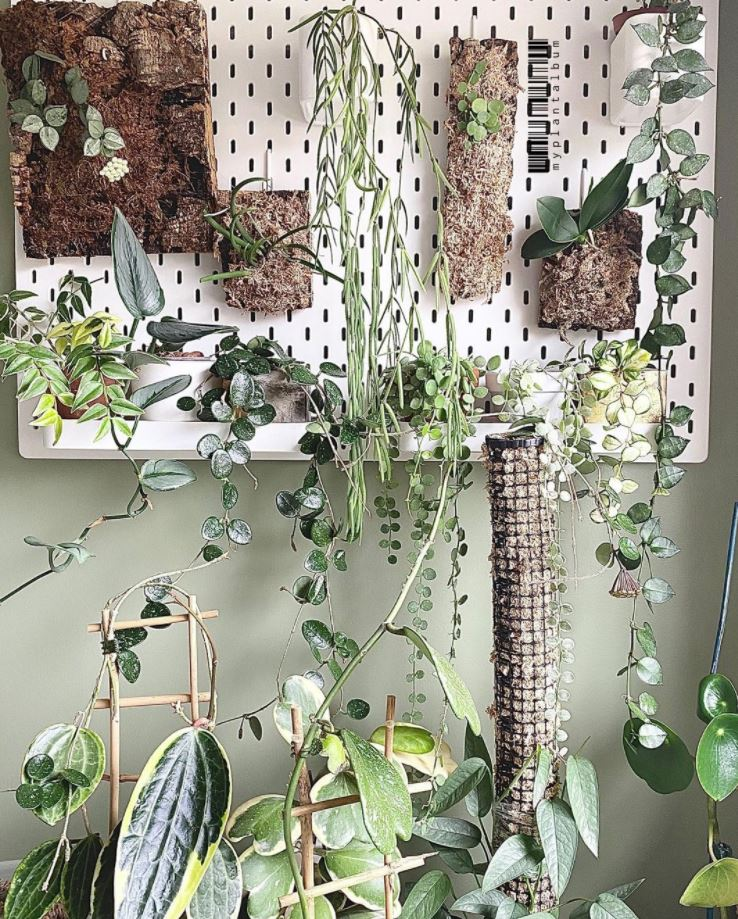 ideas para decorar el salon con plantas