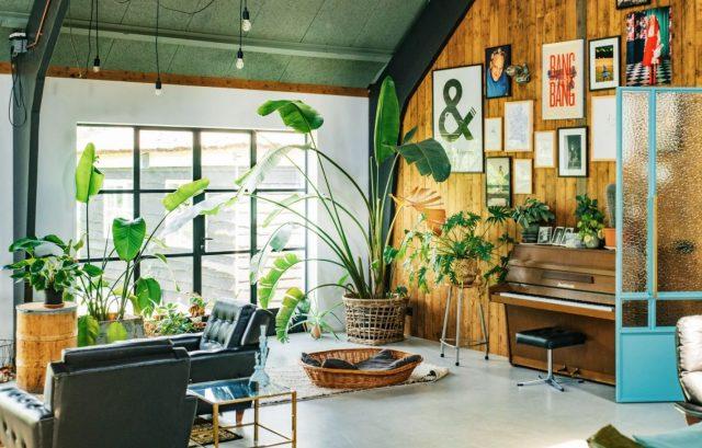 mejores plantas para decorar un salón