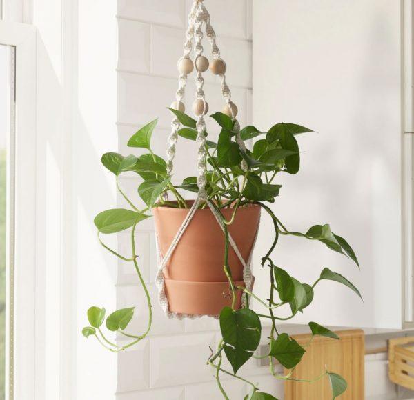 plantas colgantes para salon