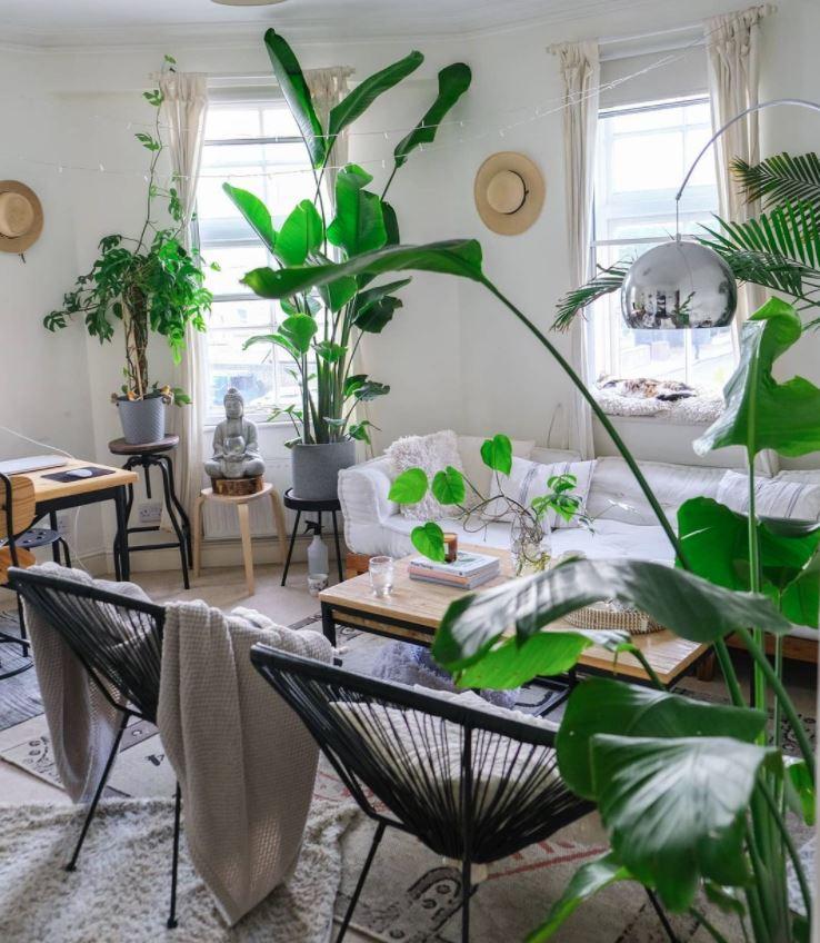 plantas de exterior en salon