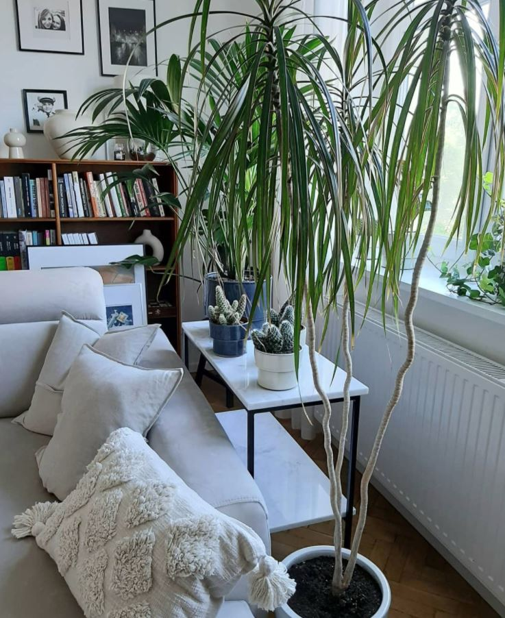 plantas decoracion interior