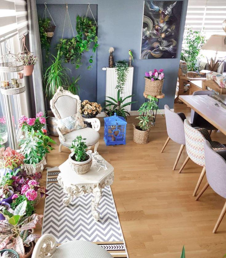 plantas para el salon