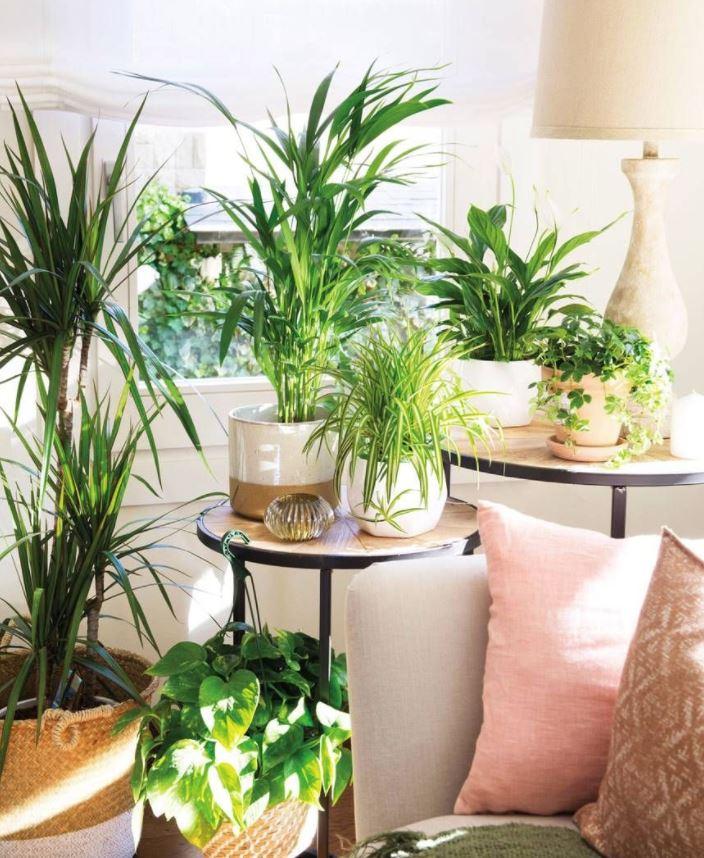 plantas para interiores oscuros