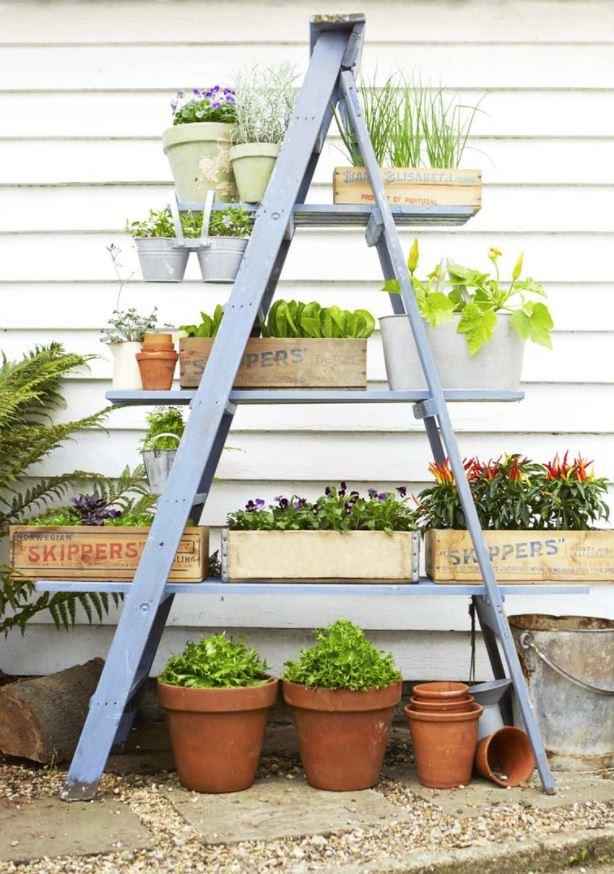 plantas para macetas exterior resistentes