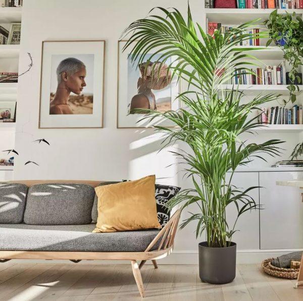 plantas para salon bonitas