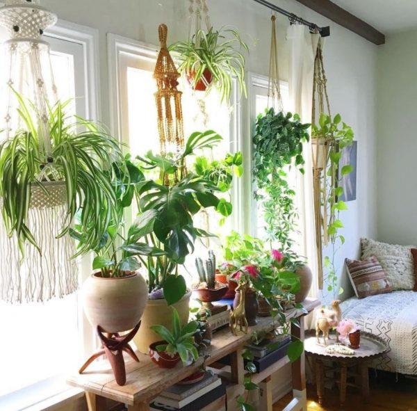 plantas para ventanas con mucho sol