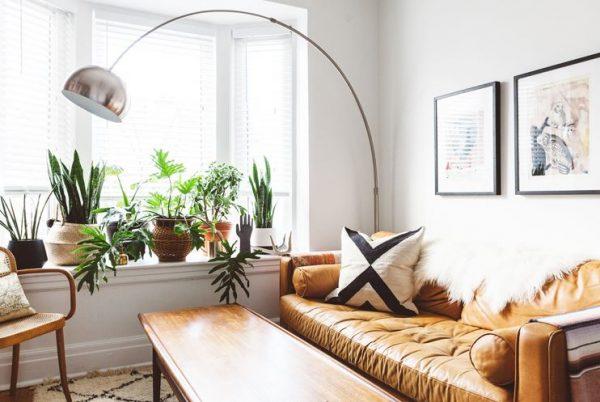 plantas para ventanas interior
