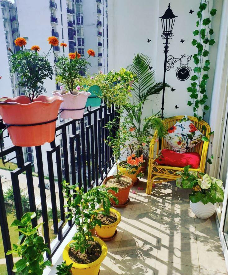 que plantas poner en una terraza con mucho sol