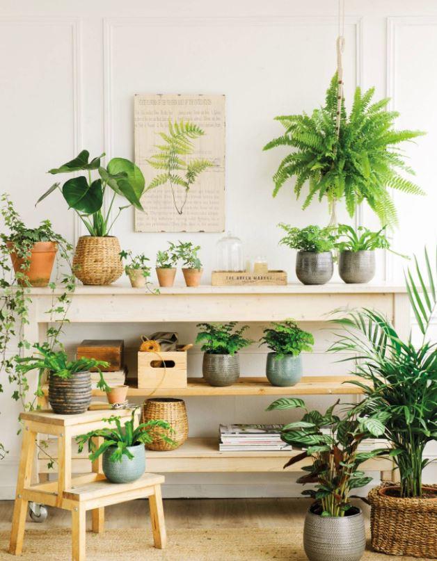 rincon de plantas en casa