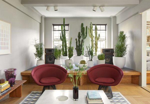 salon con plantas modernas